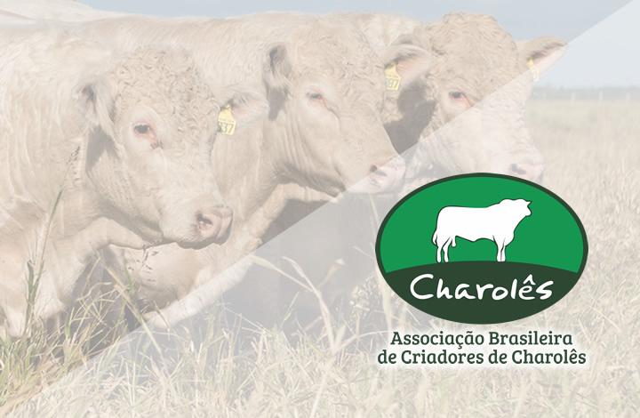 Foto de capa da galeria Expointer 2021: Julgamento Charolês